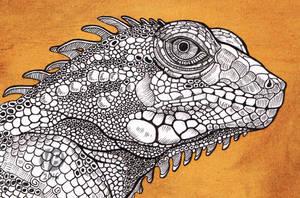 Iguana by Nimphradora