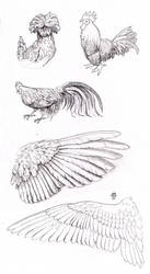 Bird and wing study by Nimphradora