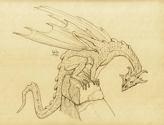 Dragon by Nimphradora