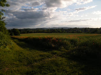 Poppy field 7 by The-strawberry-tree