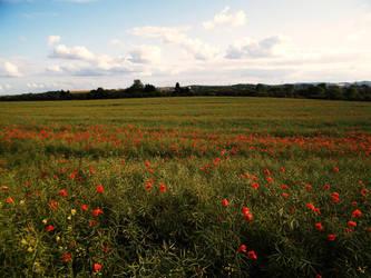 Poppy field 11 by The-strawberry-tree