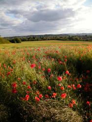 Poppyfield 12 by The-strawberry-tree