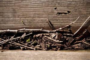 Twigs + Moss by SteveR55