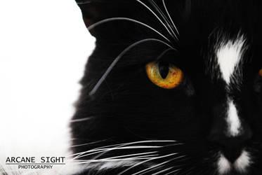 Feline I by tenshimizu101
