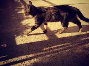 confident cat by FreeDarkened