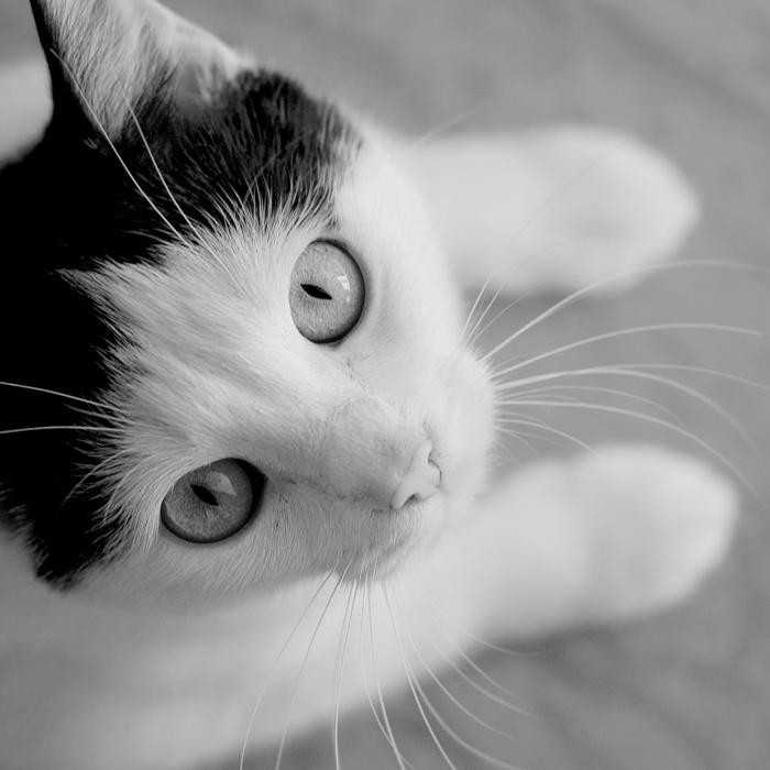 Cat by fogke