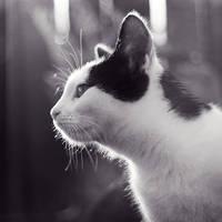 Kocici pohled by fogke