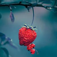 Fruit dream by fogke