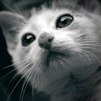 Kitty by fogke