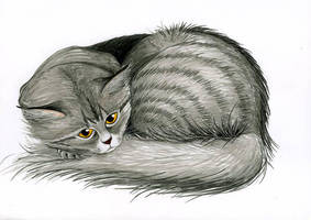My Cat In Color by Izar