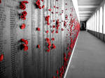 Wall of Poppies by Tora-Howes