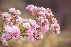 Floral - 012 by somegirlwithacamera
