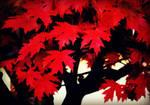 Autumn Ablaze by bridgetbright
