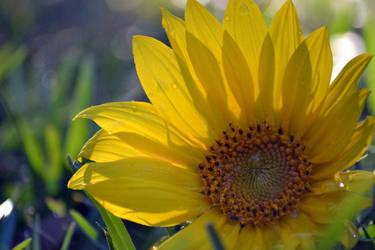 A Little Sunshine by bridgetbright