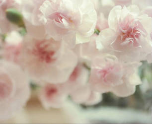 Simply Spring by bridgetbright