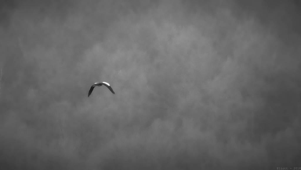 Devines le nom de l'oiseau (Europe) - Page 3 Lost_by_calidris555_dcb2y11-fullview