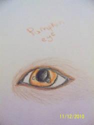 pumpkins eye by TwilightWolfSong