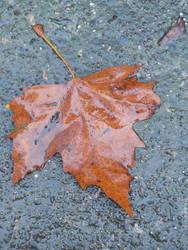 Rain On Me - A Leaf by EbbtideCheque
