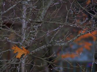 A Lone Leaf by EbbtideCheque