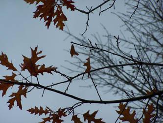 A Fall Tree by EbbtideCheque