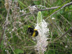 Bumblebee by TashaTremer