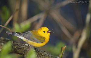 Singing Sprite of Spring by verybluebird