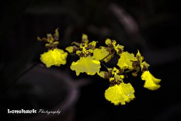 Death Yellow by dmspram