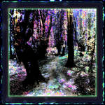 The Magic Forest by mitoXD