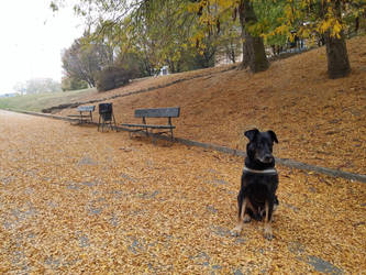 Paco and autumn at Valentino Park by wildstray