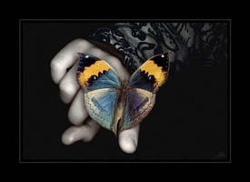 Butterfly by baljeet2506