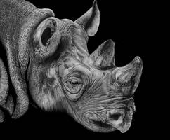White Rhino by Paul-Shanghai