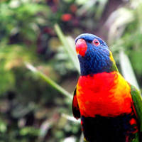 Parrot by Becky125