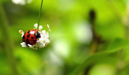 Ladybird by Becky125
