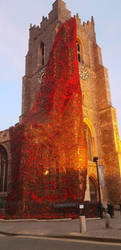 Poppies  on church - Remembrance by Becky125