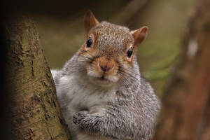 Squirrel 3-2-18 by pell21