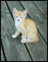 Kitty Kitty by sugabear