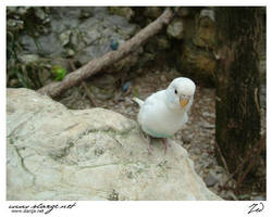 Parakeet 4 by jedro