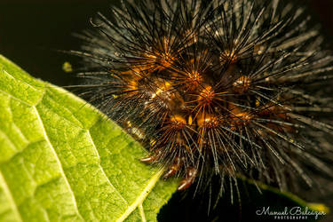 Hairy caterpillar II by mabl65