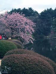 Sakura by X-bloodyprincess-X