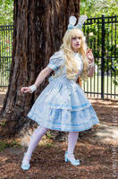 Oh, Mr Rabbit!!  - Alice Bunny Lolita fashion by jobiberry