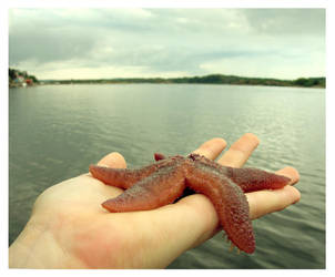 Starfish by Syster