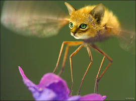moskittyo by imamon