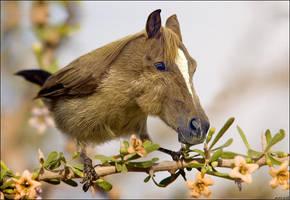 horsefinch by imamon