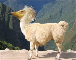 llamabird by imamon