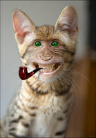 kittin monkey by imamon