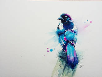 Magpie by xXxParabolaxXx