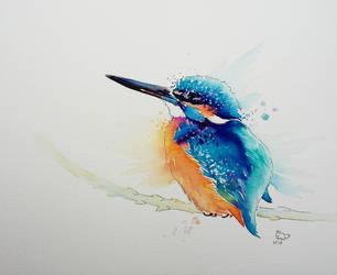 Kingfisher by xXxParabolaxXx