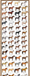 Breed Chart: Horseisle 1-69 by EponaN64