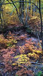 Autumn by Milvina