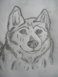 My old dog by WolfQuestYamato